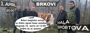 BRKOVI..Band Picture 3