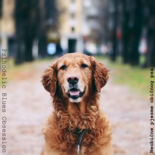 """PBO – """"Neobične pjesme običnog psa"""""""